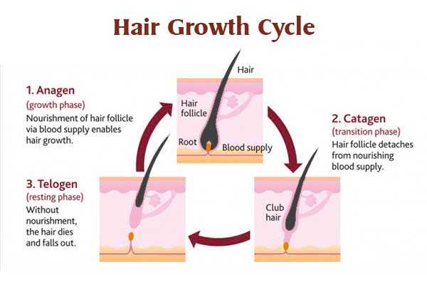 Normal Hair Growth